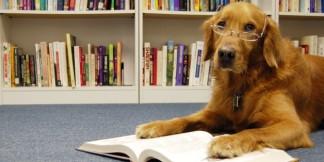 n-DOG-READING-A-BOOK-628x314
