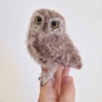 baby-tawny-owl-1.jpg